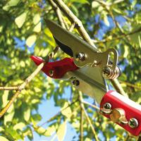 高枝切鋏-細い枝の剪定